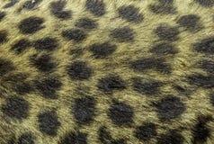 Текстура гепарда кожаная стоковое фото
