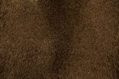 Текстура меха норки. The texture of mink fur dark brown color close-up Royalty Free Stock Image