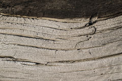 Текстура старой древесины. The texture of the old cracked wood surfaces Royalty Free Stock Photography
