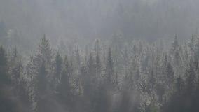 Темный лес в пыли утра сток-видео