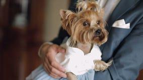Терьер собаки в смешном платье видеоматериал