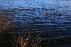 Тихое океан северо-западное озеро леса стоковые фотографии rf
