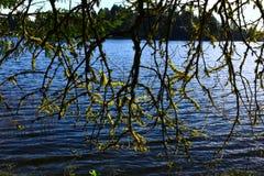 Тихое океан северо-западное озеро леса стоковое фото