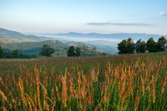 Туманное утро лета в долине Almaj стоковое изображение