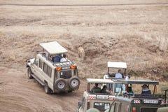 Туристы в автомобилях сафари наблюдают львицу стоковое фото rf