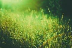 Трава лета на луге стоковая фотография