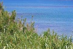 Травянистые тростники морем стоковое фото