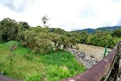 Трубопровод в джунглях стоковые фото