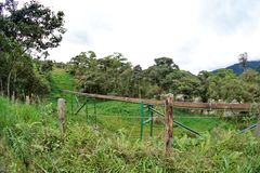 Трубопровод в джунглях стоковое фото rf