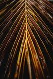 Тропические лист кокоса стоковые фотографии rf