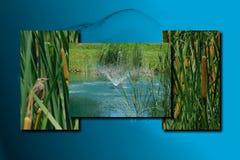 Тростники на голубом каскадируя пруде стоковое фото