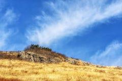 Тростники травы Ganwoljae высокорослые стоковое изображение