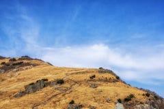 Тростники травы Ganwoljae высокорослые стоковые фотографии rf