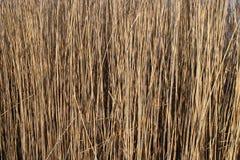 Тросточки в wintertime стоковое изображение