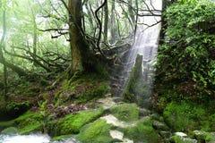 Фокус на пне дерева в солнечном свете, Yakushima, Японии стоковые изображения