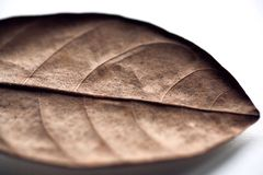 Форма и текстура только одного высушенного листа от линий леса завода стоковые фото