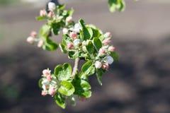 Цвести весны естественный деревьев в теплой солнечной погоде стоковое фото