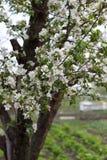 Цвести весны естественный деревьев в теплой солнечной погоде стоковое изображение