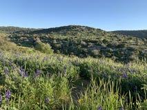Цветене весны в холмах Иудея стоковое изображение rf