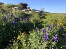 Цветене весны в холмах Иудея стоковые фото