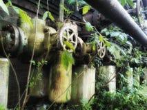 Цветеня весны старых труб новые стоковые изображения rf