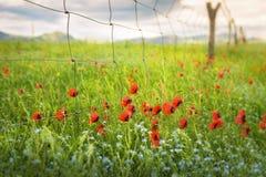 Цветки в полях стоковое изображение