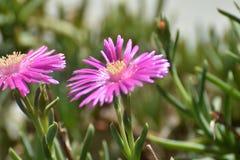 Цветки от сада стоковое изображение rf