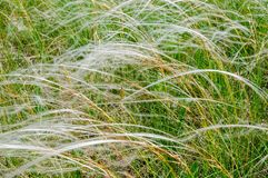May steppe landscape with blossoming feather grass. royalty free stock photography