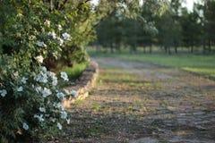 цветы в парке Royalty Free Stock Photography