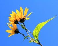 Цветок; цветорасположение стоковые изображения