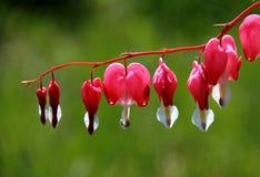 Цветок; цветорасположение стоковые фотографии rf
