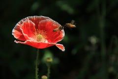 Цветок; цветорасположение стоковое фото rf