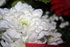 цветочный фон stock image