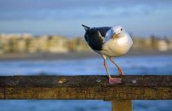Чайка на заходе солнца стоковые фото
