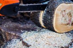 Человек пиля электрическую пилу большое дерево стоковое фото rf
