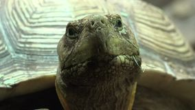Черепаха или черепаха акции видеоматериалы