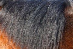 Черная грива лошади в конце-вверх солнца Смогите быть использовано как текстура для украшения стоковые изображения rf