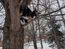 Черный кот имбиря сидя на дереве стоковые фото