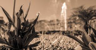 Черно-белый взгляд к фонтану стоковая фотография