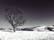 Художественные дерево в черноте lanscape снега & белый стоковое фото rf