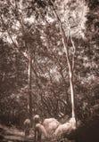 Художественное изображение коз пася под деревьями эвкалипта иллюстрация вектора