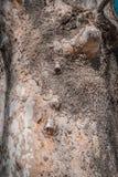 Хобот дерева которое имеет старую электрическую поддержку стоковые фотографии rf