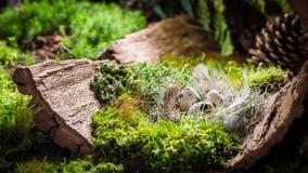 Различные пасхальные яйца на коре с мхом в лесе стоковое изображение
