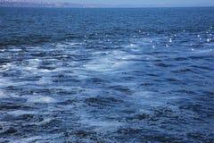 Разрядка грязной промышленной отработанной воды в море Отравление рекреационной зоны распространением заболевания, разрушения фло стоковая фотография