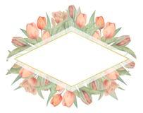 Рамка акварели с тюльпанами Нарисовано вручную Идеал для логотипа, приглашений свадьбы, карт, плакатов иллюстрация штока
