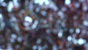 Расплывчатый танец красных листьев в замедленном движении ветра осени акции видеоматериалы