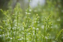 Растя растительность в луге в предыдущей весне стоковые изображения rf