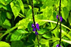 Расцветать цвести сезон цветка весной в сочном зеленом саде стоковые фото
