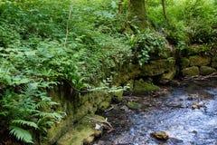 Река с мхом покрыло утесы на swabian Стихарь стоковые фото