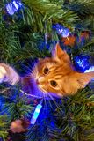 Cat on Christmas tree. Red cute kitten. New Year. royalty free stock images